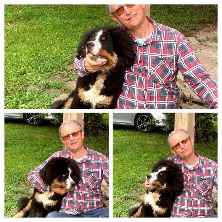 Spotkanie miłośników berneńskich psów pasterskich 1